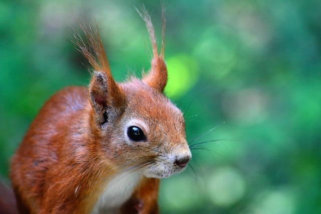 Free squirrel pets nature