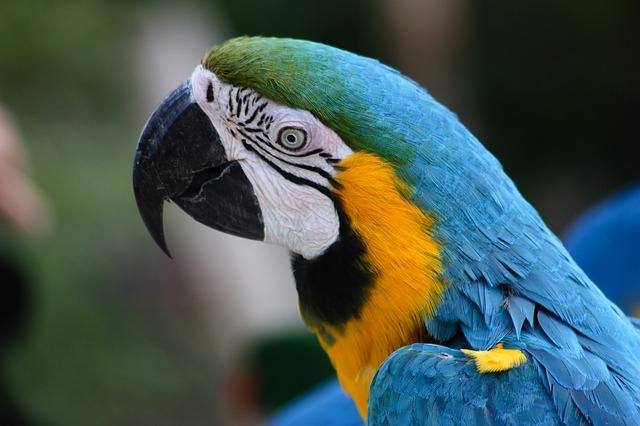 Free parrot ara bird birds plumage ara erythrocephala