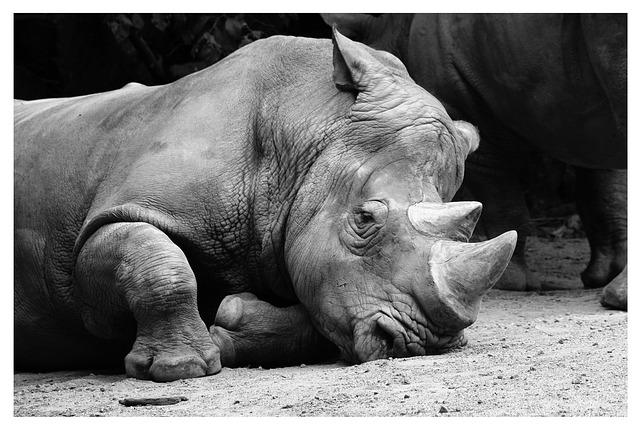 Free rhino pets zoo