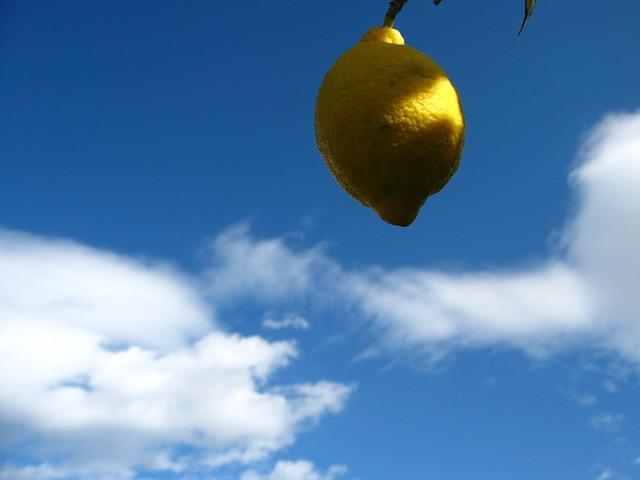 Free lemon citrus spain fruits citrus fruits vitamins