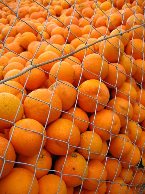 Free orange spain sunny oranges citrus vitamins