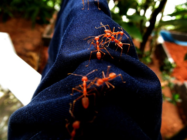 Free jeans denim ants