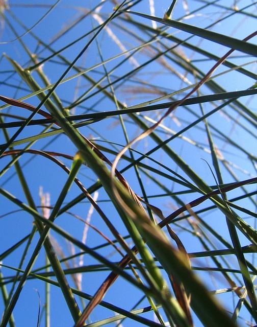 Free grasses grass halme sky stems stalk