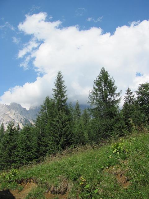 Free pine mountain cadore belluno borca val de cuze
