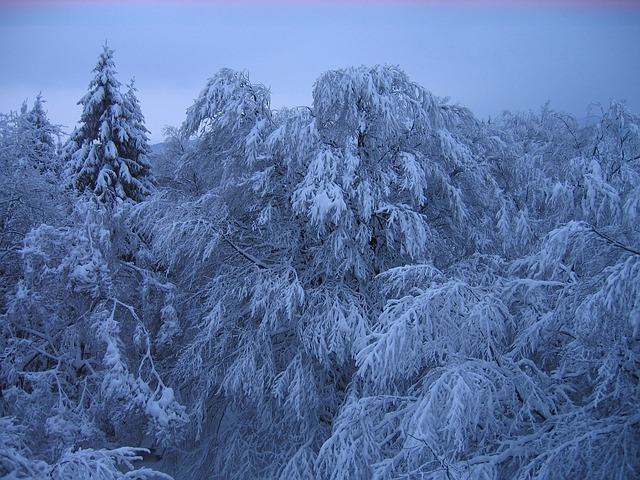 Free Photos: Germany forest trees woods winter snow ice sky | David Mark