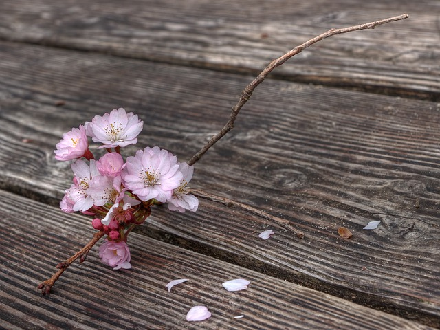Free flowers flowering twig spring blossomed branch
