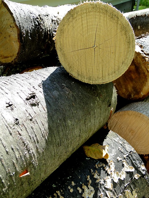 Free wood trees cut wood logs firewood stack stacked