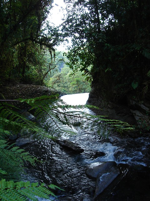 Free forest river water