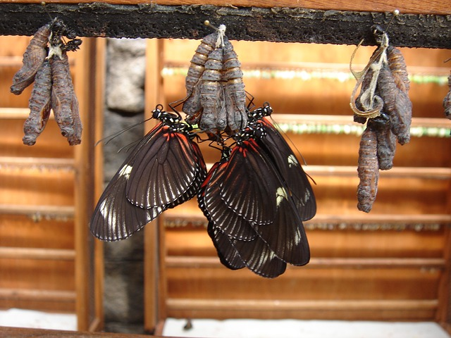 Free Photos: Butterflies insect dolls | frank23