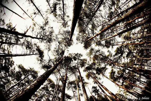 Free trees fisheye nature heaven