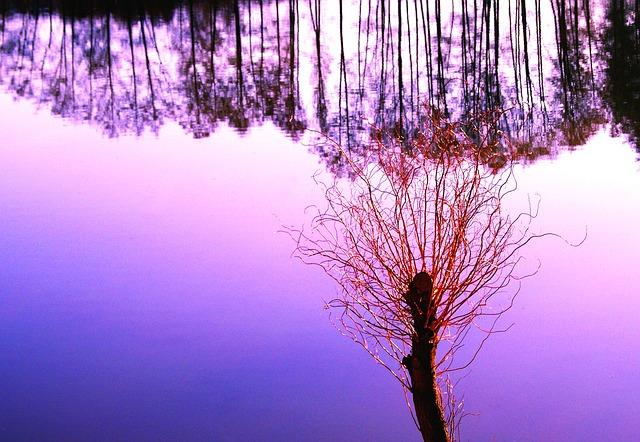 Free willow water pond flowering nature spring