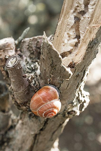 Free snail snails nature log wood tribe bark tree