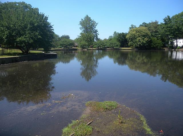 Free Photos: Roslyn new york park trees shoreline pond water | David Mark
