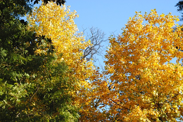 Free landscape cristina enea tree plants
