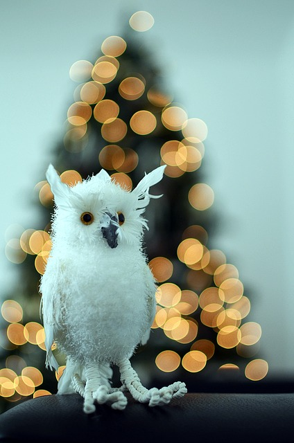 Free toy bird christmas bokeh