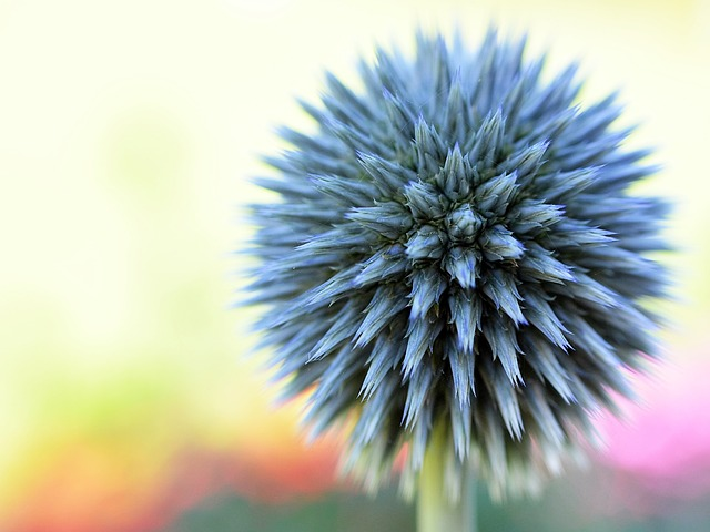 Free flower spring blue macro