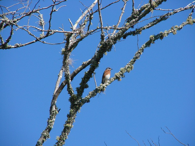 Free birds eastern blue bird animal
