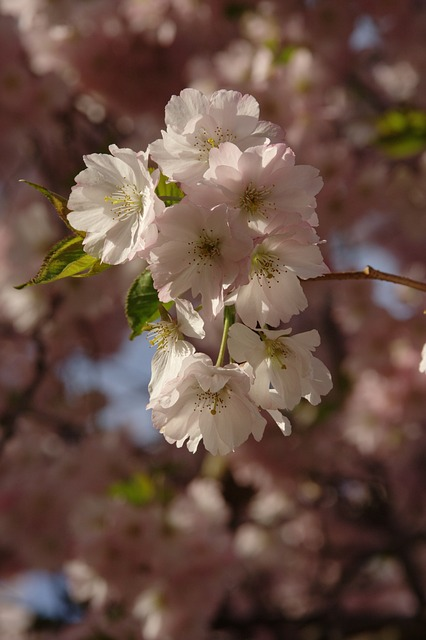 Free spring flowers plant nature
