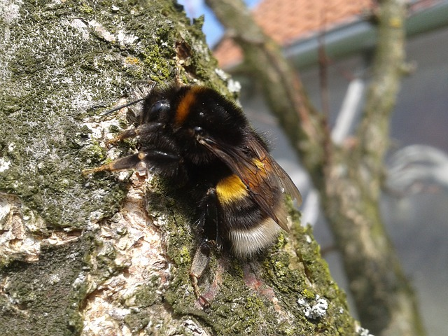 Free bumble-bee tree nature wings freedom