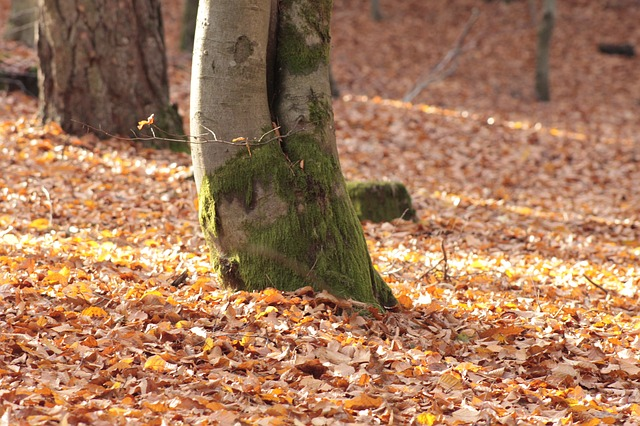 Free autumn forest leaves forest floor autumn
