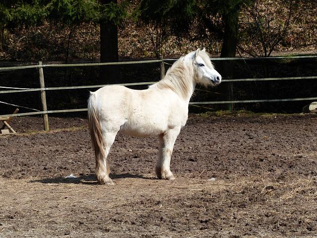 Free pony horse pleasure horse horse riding ponyrasse