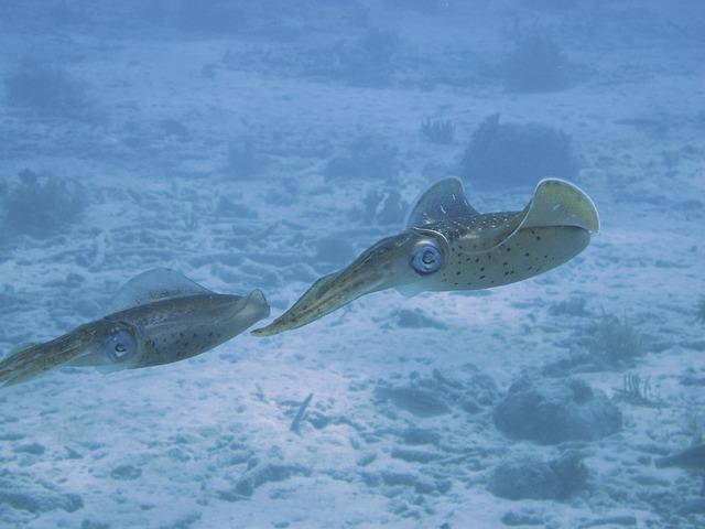 Free underwater dive squid