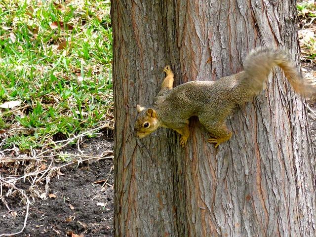 Free squirrel tree animal park