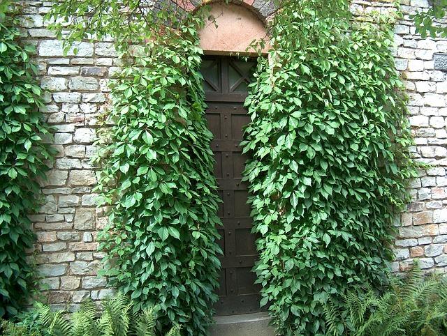 Free door goal input ivy ivy trellis mysterious wall