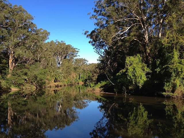 Free australia forest trees woods stream water