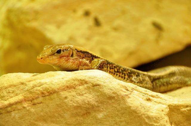 Free lizard reptile animal close