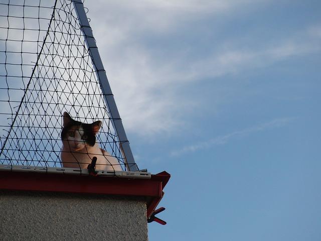 Free cat curious pets