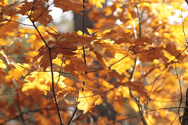Free leaves fall color forest autumn