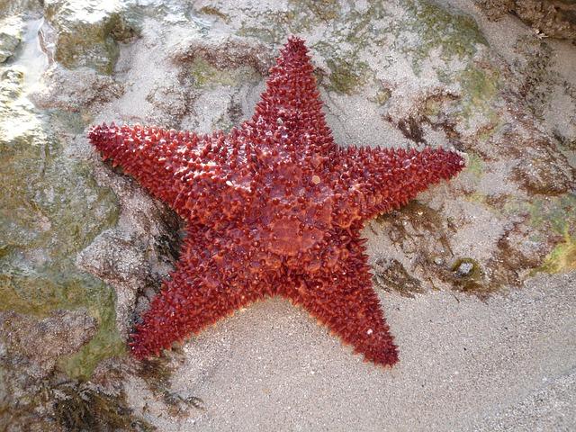 Free sea sea star island martinique ocean caribbean