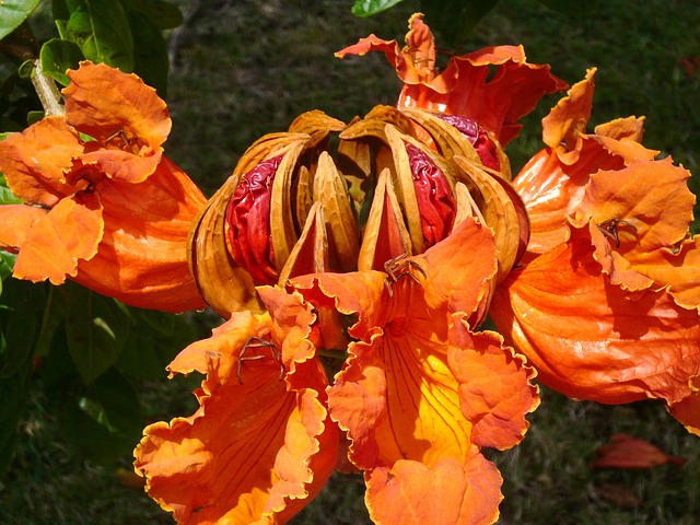 Free Photos: Island caribbean martinique big tree flower | Joëlle Ortet