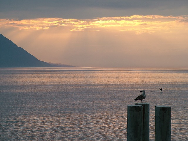 Free switzerland montreux lake geneva sunset
