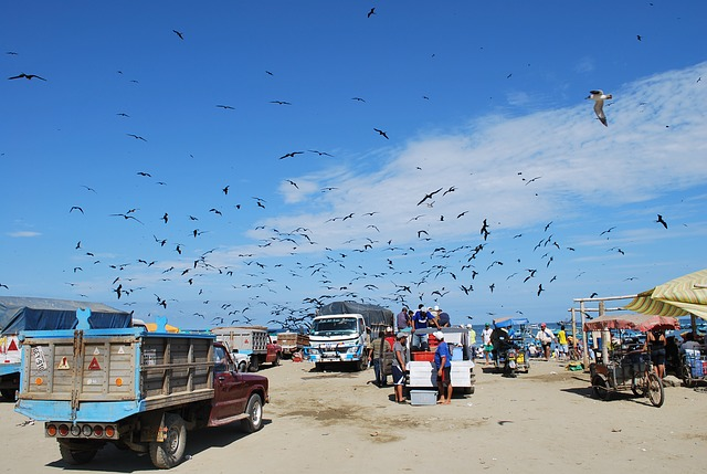 Free puerto lopez ecuador sky clouds bird men trucks