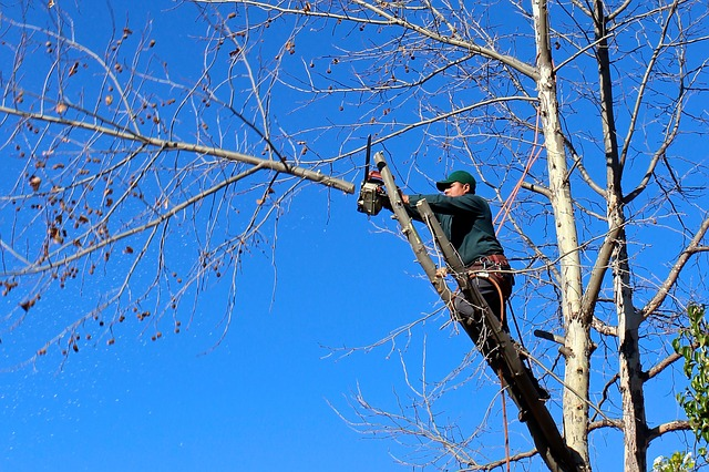 Free tree woodcutter chainsaw pruning trimming felling