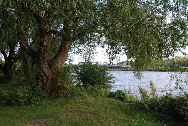 Free graze trees uferweg river ruhr nature tree