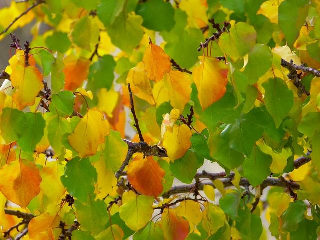 Free leaves fall color colorful fall leaves fall foliage