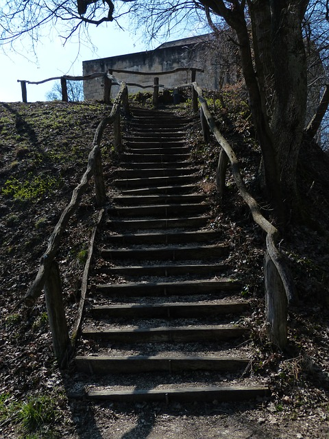 Free stairs wood forest nature out natural steps