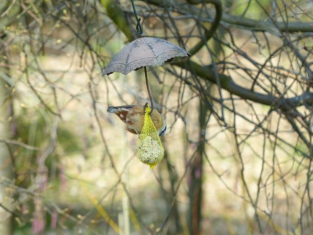 Free kleiber bird sitta europaea species branch sit