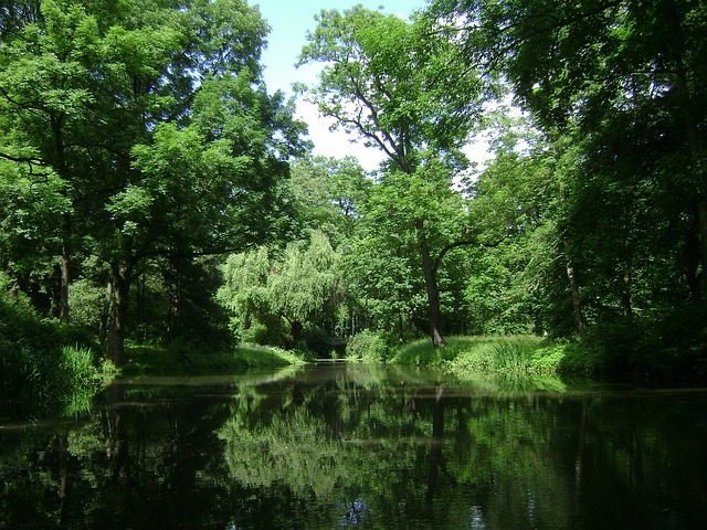 Free               warsaw poland park forest trees woods lake pond