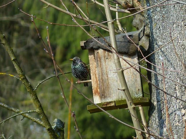 Free star bird animal nesting box black spotted