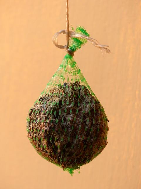Free fat balls food bird seed feed eat network hang