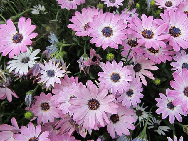 Free Photos: Flowers plant garden | noboru akamatsu