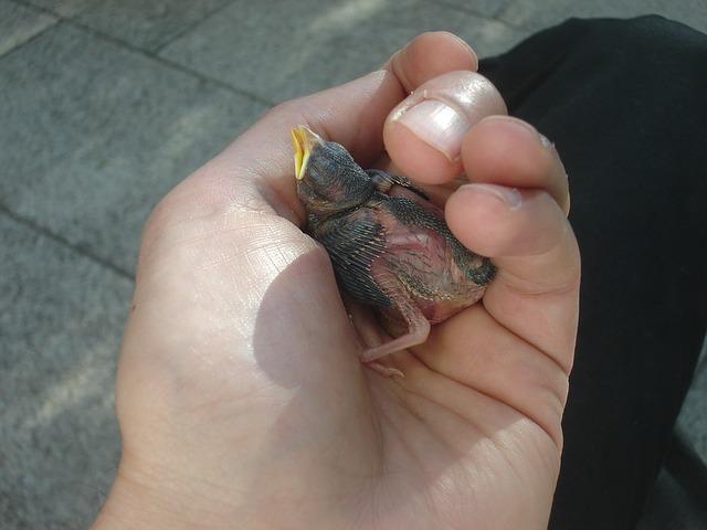 Free bird hand helpless recovered sun nest favor