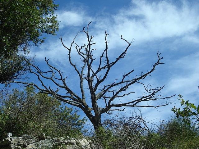 Free tree dead plant dead nature sky black blue