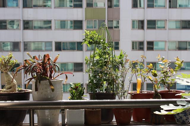 Free potted plant apartments veranda plants people tree