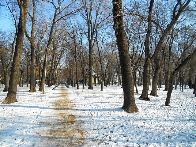 Free moldova park winter snow scenic landscape path