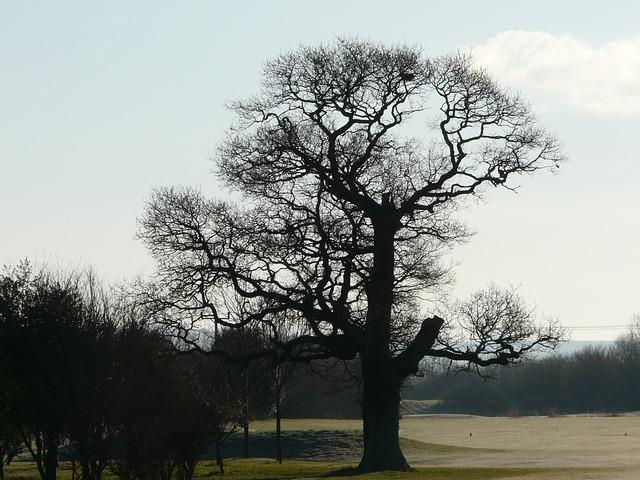 Free tree old tree nature seasons winter day